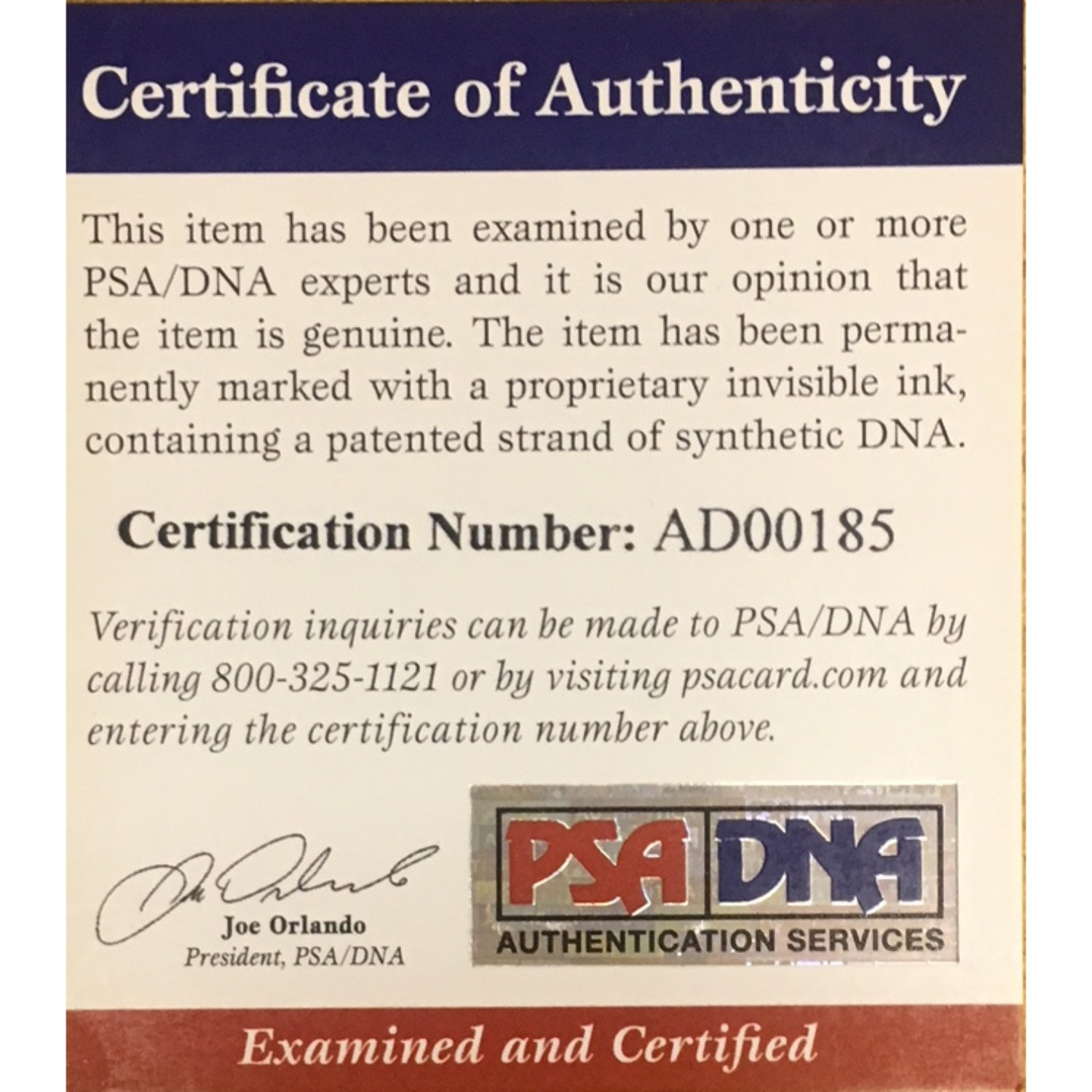 Kris Bryant Chicago Cubs Autographed MLB Signed Baseball PSA DNA COA 2